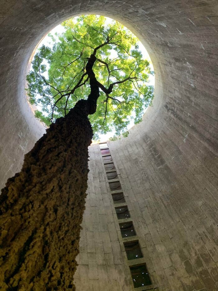 Found This Beautiful Tree Growing Inside An Abandoned Silo While I Was Exploring