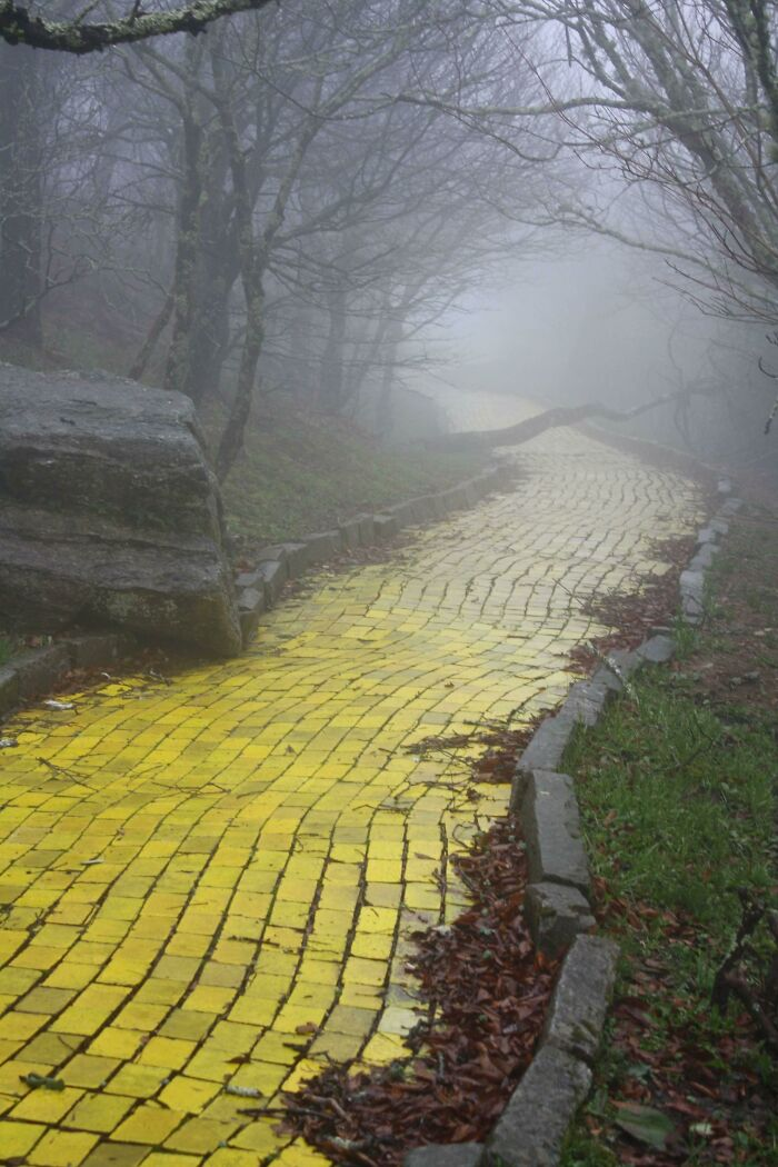 """El camino de baldosas amarillas del parque temático abandonado """"Tierra de Oz"""" en Carolina del Norte"""