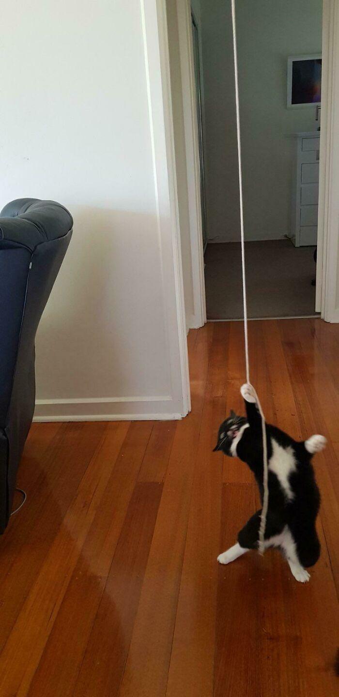 El gato se niega a jugar con cualquier cosa... Hasta que le saco un poco de cuerda