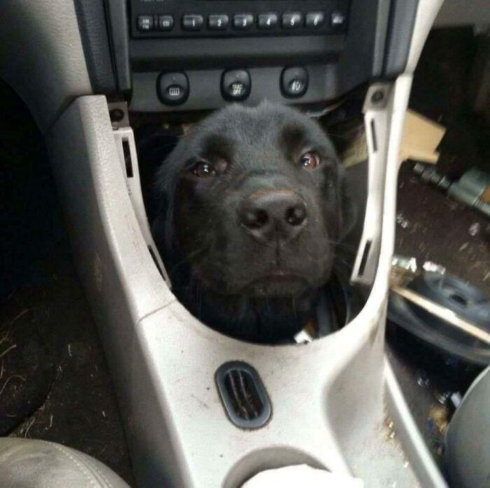 Transmission Is Stuck In Bark. Put It In Rufferse