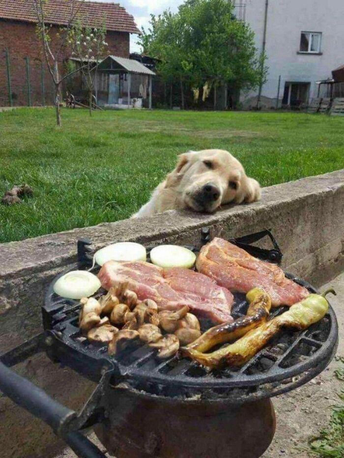 Day Dreaming In Front Of The BBQ