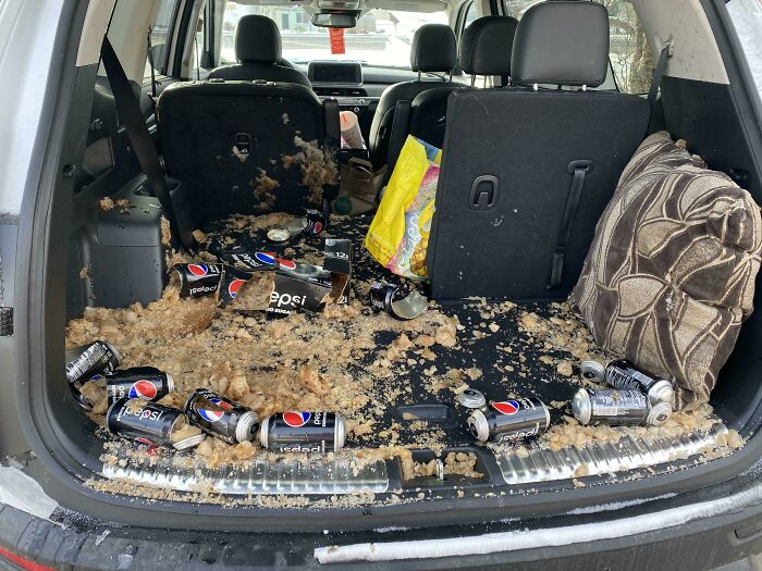 I Forgot The Pepsi Was In The Back Of My Car, And It Was -16 Fahrenheit Night Before Last