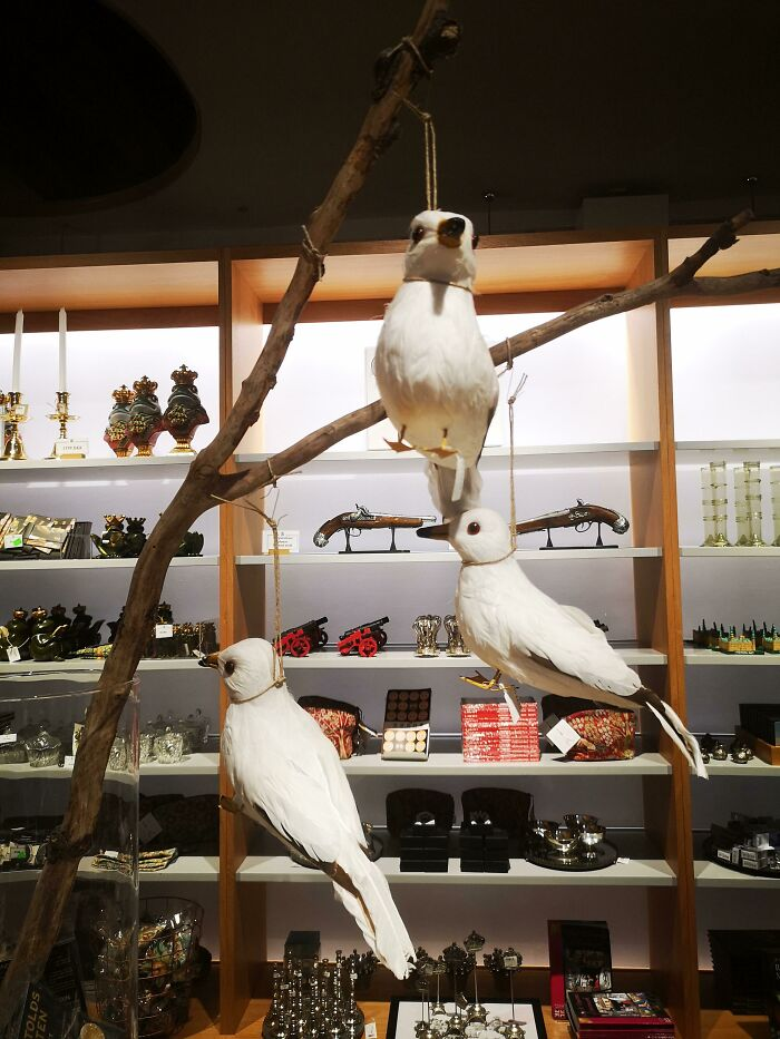How Not To Sell Birbs In A Museum Shop