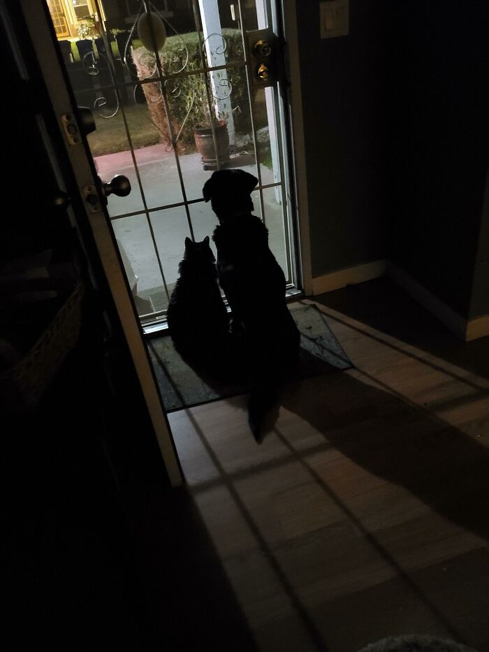My Son Always Texts To Say He's On His Way Home. So I Open The Door, Letting His 17 Year Old Cat, And 16 Year Old Doggo Know That He's On His Way. This Is Them Waiting For Him. Thought It Was Adorable, And Wanted To Share