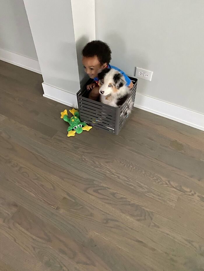 Just A Boy And His New Dog