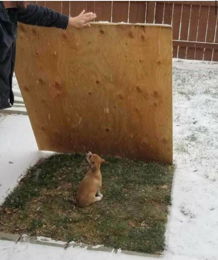 Little Dog Doesn't Like Snow, Bro Human Lays Down Plywood For Her In The Winter So She Can Always Have A Grassy Spot To Potty