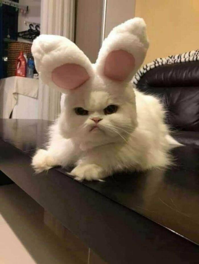She Didn't Like Her New Ears