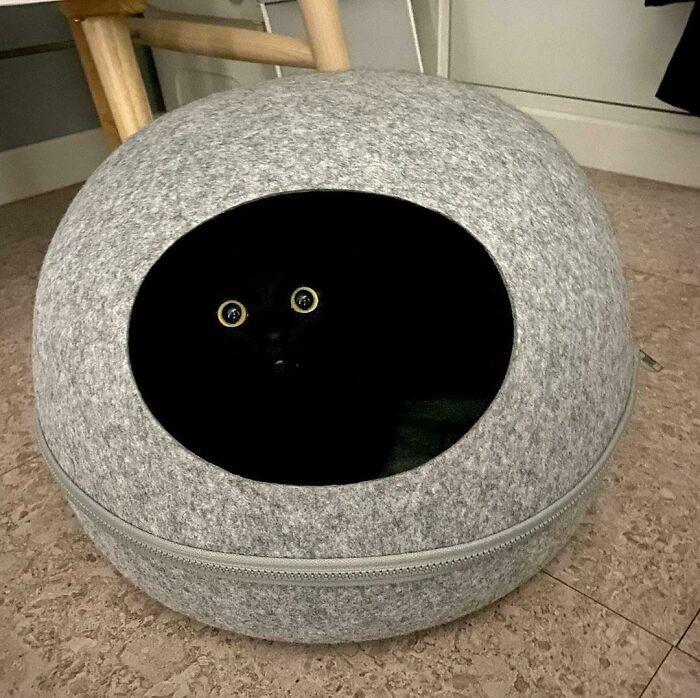 Black Cat Kinda Sus