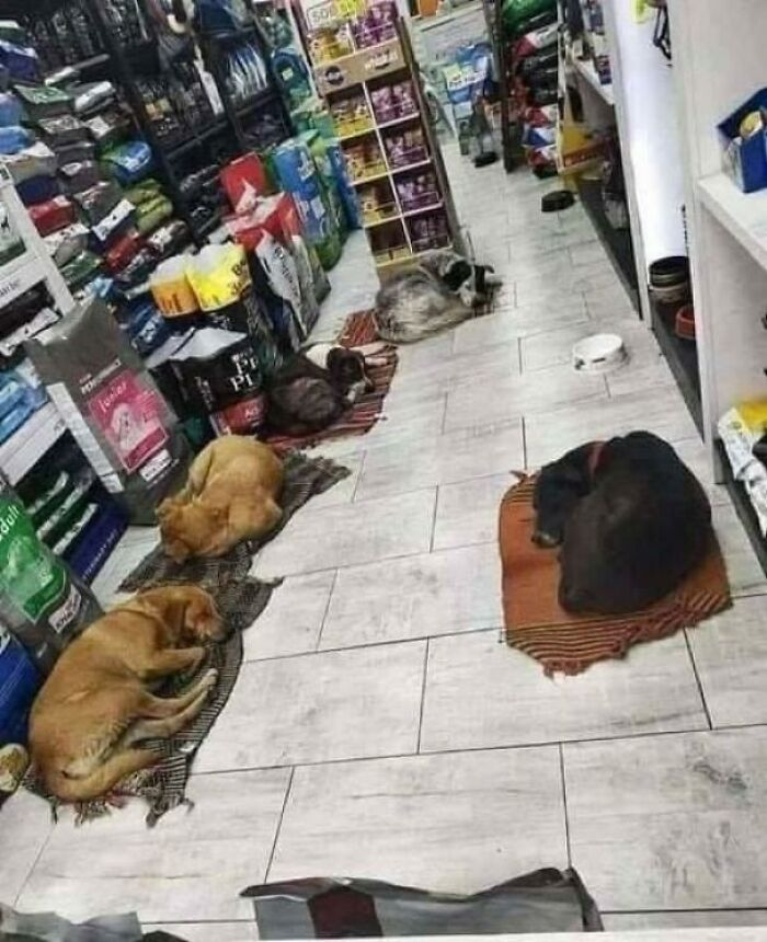 The Owner In This Shop Allows Stray Dogs To Come In When It Is Dark So That They Can Spend The Nights Safely .. He Put Blankets To Cover The Cold Tiles So Everyone Has A Comfortable Bed .. Such Initiatives Must Be Shared!