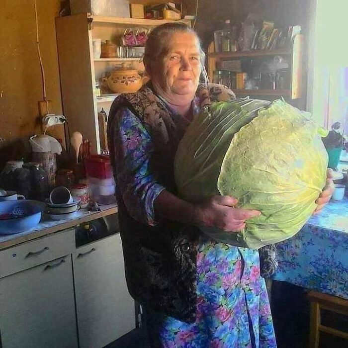 Absolute Unit Of A Cabbage