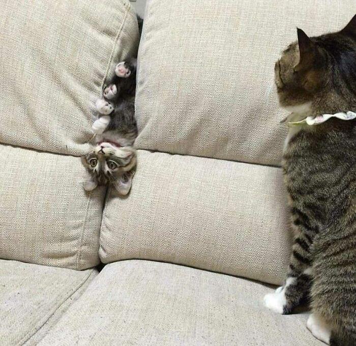 Aprendiendo a hacer de gato. Los avances son lentos