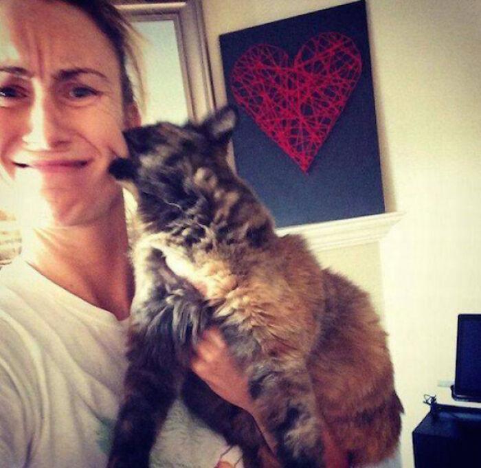 Even Cats Hate Selfies