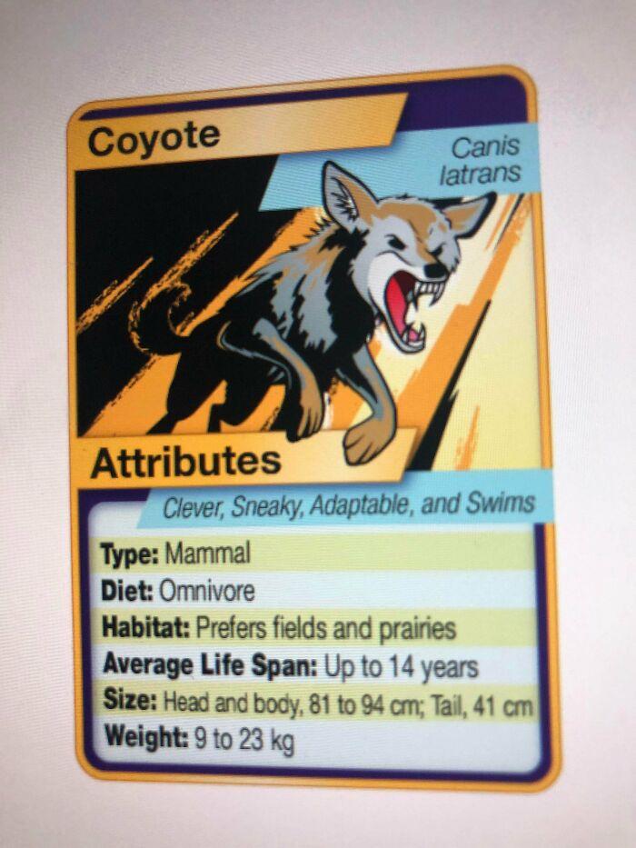 My Teacher Made Pokémon Animal Type Of Cards For Science.