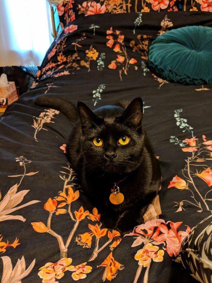 Went To Adopt Orange Cat, Got A Cat With Orange Eyes