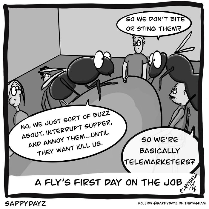 A Fly's First Day In The Job