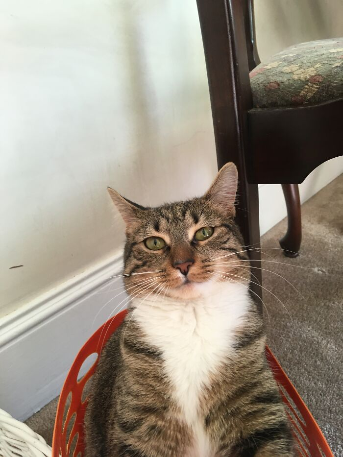 Melody In Her Basket