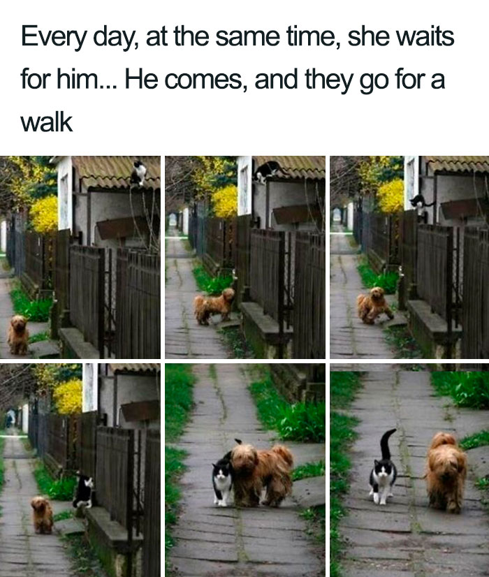She Barks To Call Him. He Comes, They Rub And Greet Each Other And They Go For A Walk