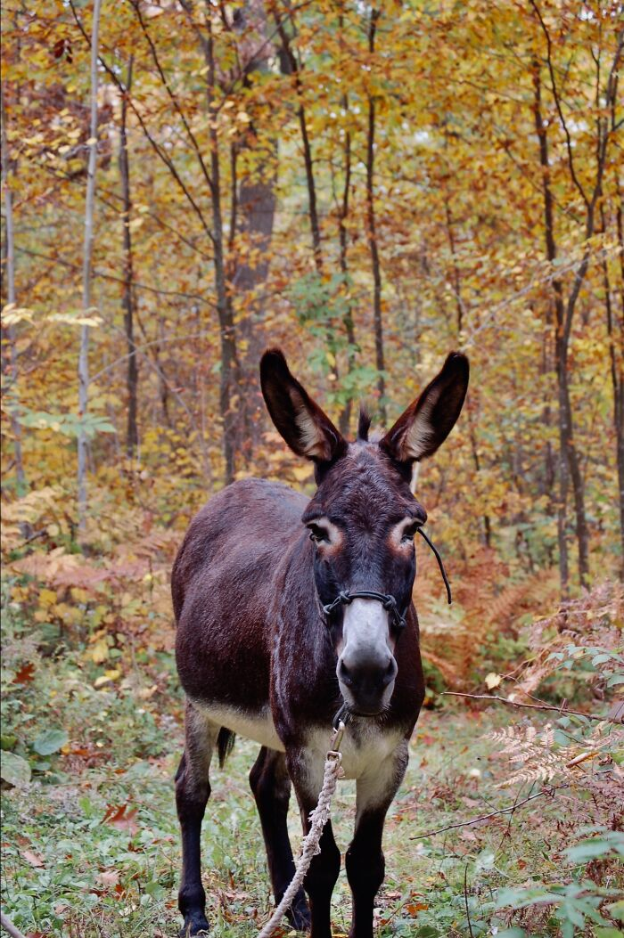 This Isn't My Donkey But A Family Friends But I Took The Picture