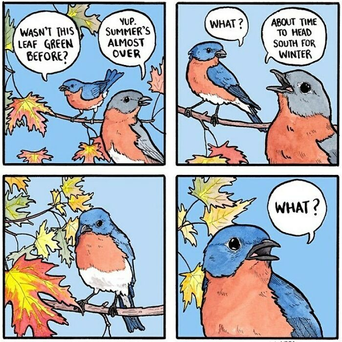 It's Migration Season Once Again For A Lot Of Birds, So Be Nice To Them As They Fly Overhead! No Shouting Obscenities Or Chatting Them Up About The Weather—they're Busy! #oldknees #easternbluebird