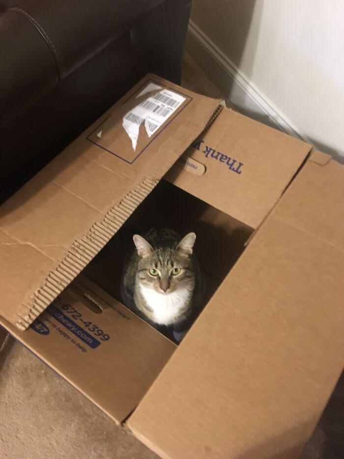 Boxy Lady