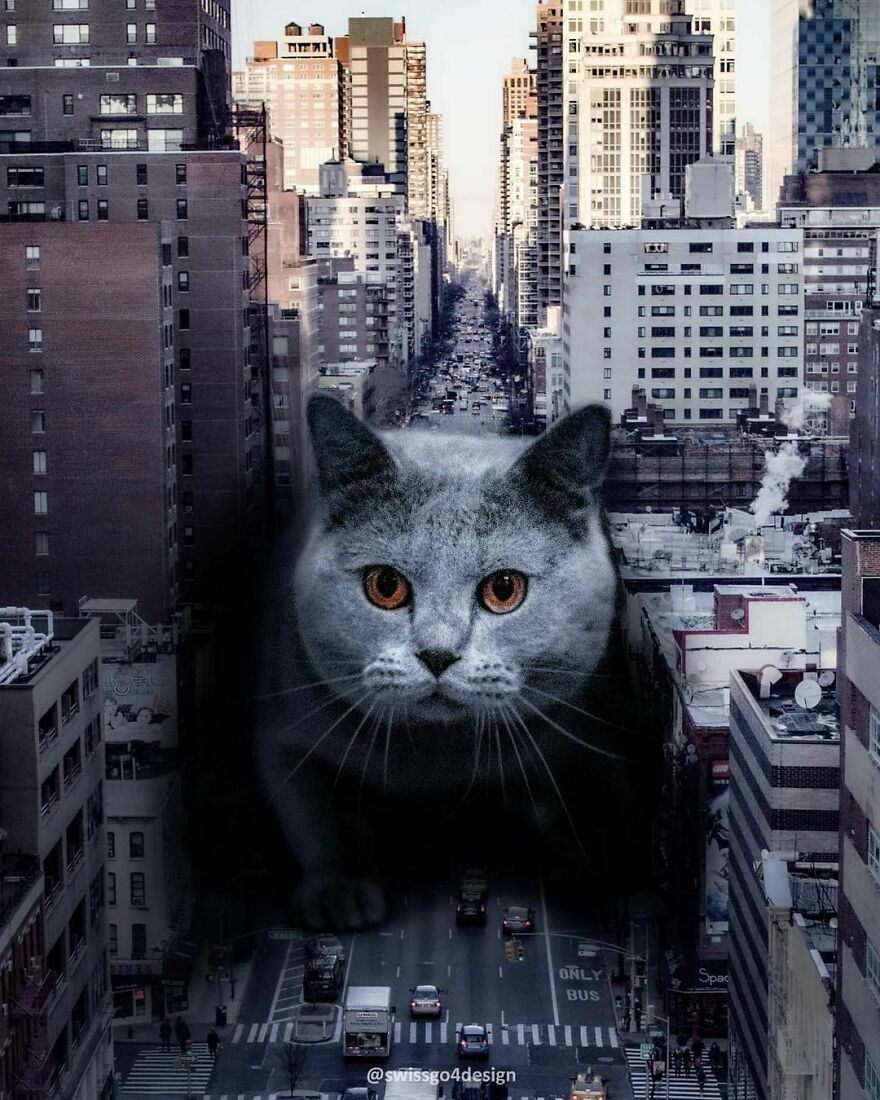 Meowzilla, Citykitty, Cat-Astrophe Or Cing Cong Cat - How Would You Call This Edit? . . op @unsplash Made With @photoshop . . #artbasel #psduniverse #learnphotoshop #trippypainting #catloversclub #newyork #artselect #dailyart #9gag #citykillerz #dailyart #digitalcontentors #enterimagination #edit_mania #editvisual #empireoffuture #graphicroozane #launchdsigns #manipulationteam #xceptionaledits #theuniversalart #thecreatart #thecreativers #thecreart #photoshop_indonesia #gmofps #imaginativeuniverse #creativecloud_fantasy #ps_ultraviolet
