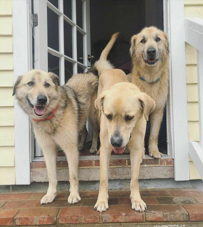 90-Rescue-Animals-Adri-Rachelle