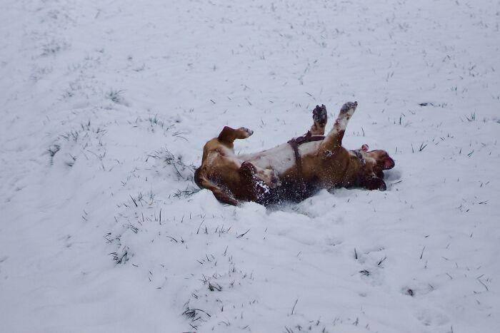 Freya Having Fun In Snow
