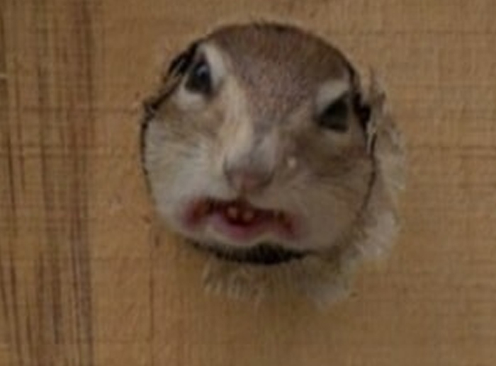 Oh Look, Honey.. There's A Sweet Little Chipmunk In The Bird House... *quickly Grabs Camera*