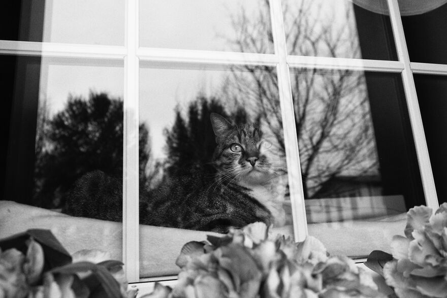 My Sissi, Looking Through The Window