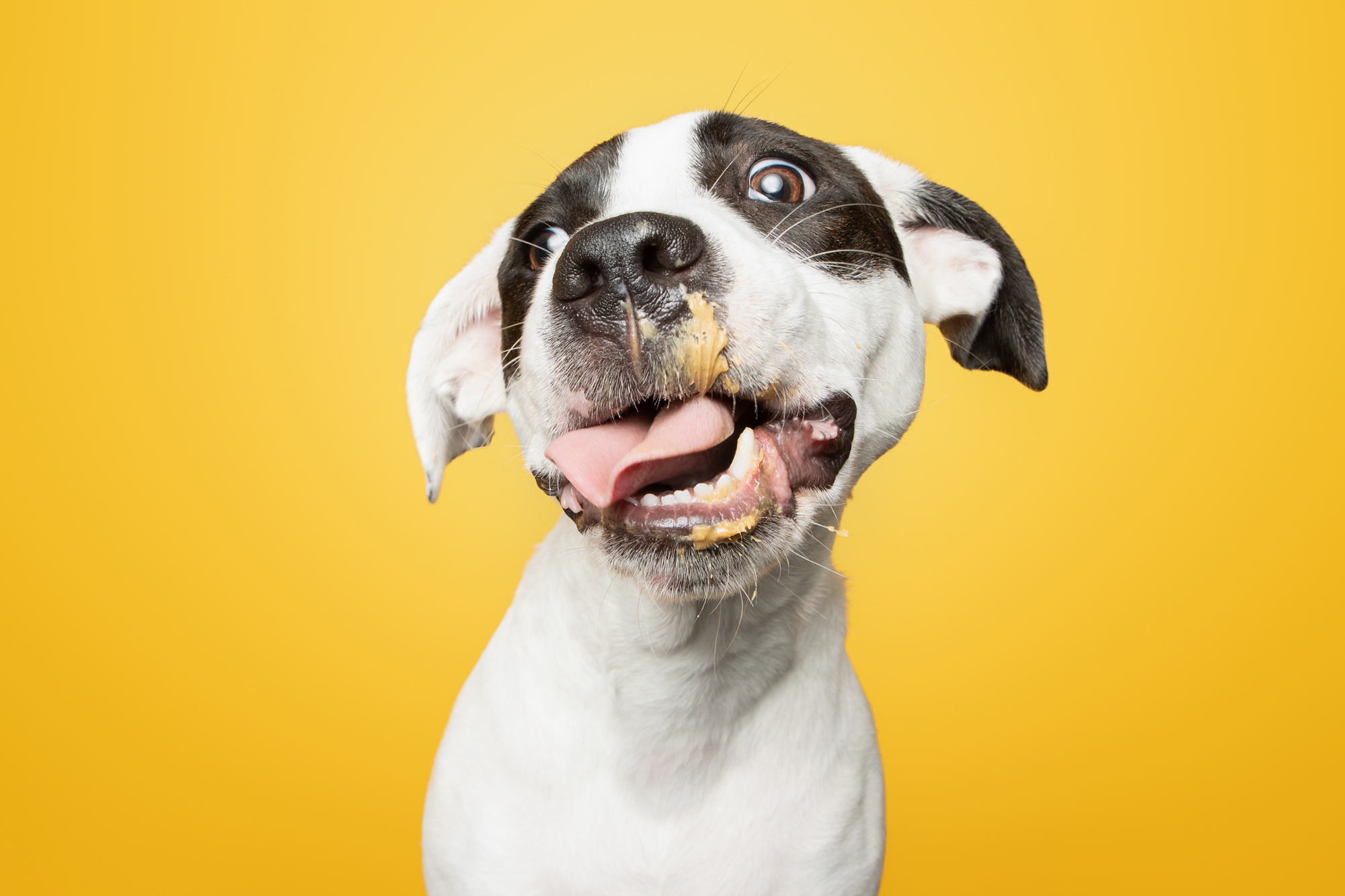 These Photos Of Rescue Puppies Eating Peanut Butter Will Make Your Day, I Guarantee It.