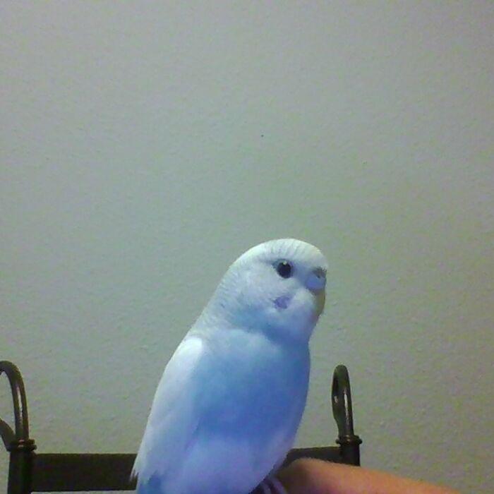 This Is My Bird, Mozzie