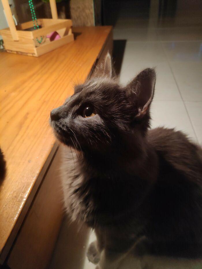 Cat Catmichael