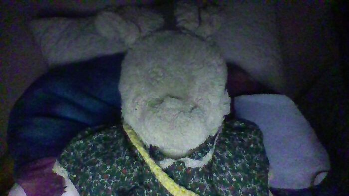 My Stuffed Animal Fluffy! She Was Given To Me By My Mom