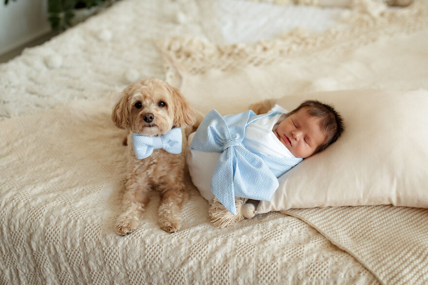 I Took Pictures Of A Family With Their Newborn Baby And Dogs (10 Pics)