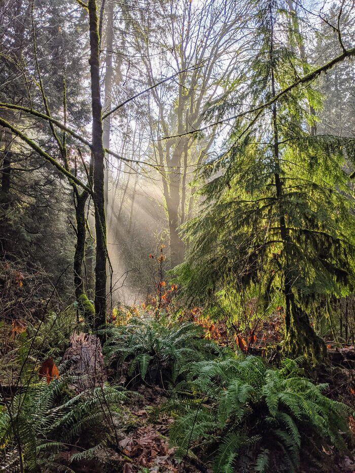 Spirit-Replenishing Walk In The University Endowment Lands (Vancouver). Hello Springtime!