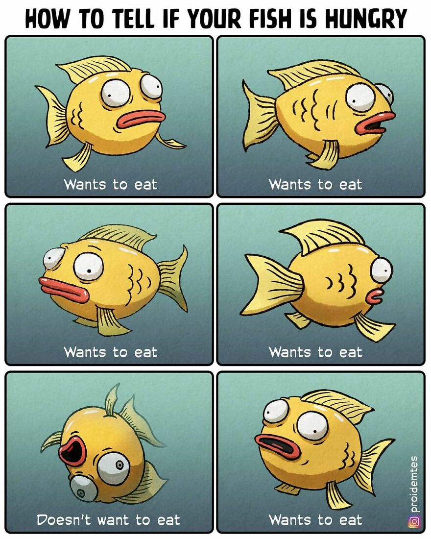 Fish Language. Tip Number 1
