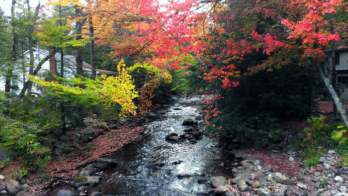 Mud Run Creek In Autumn, Pocono Mountains Of North East Pa