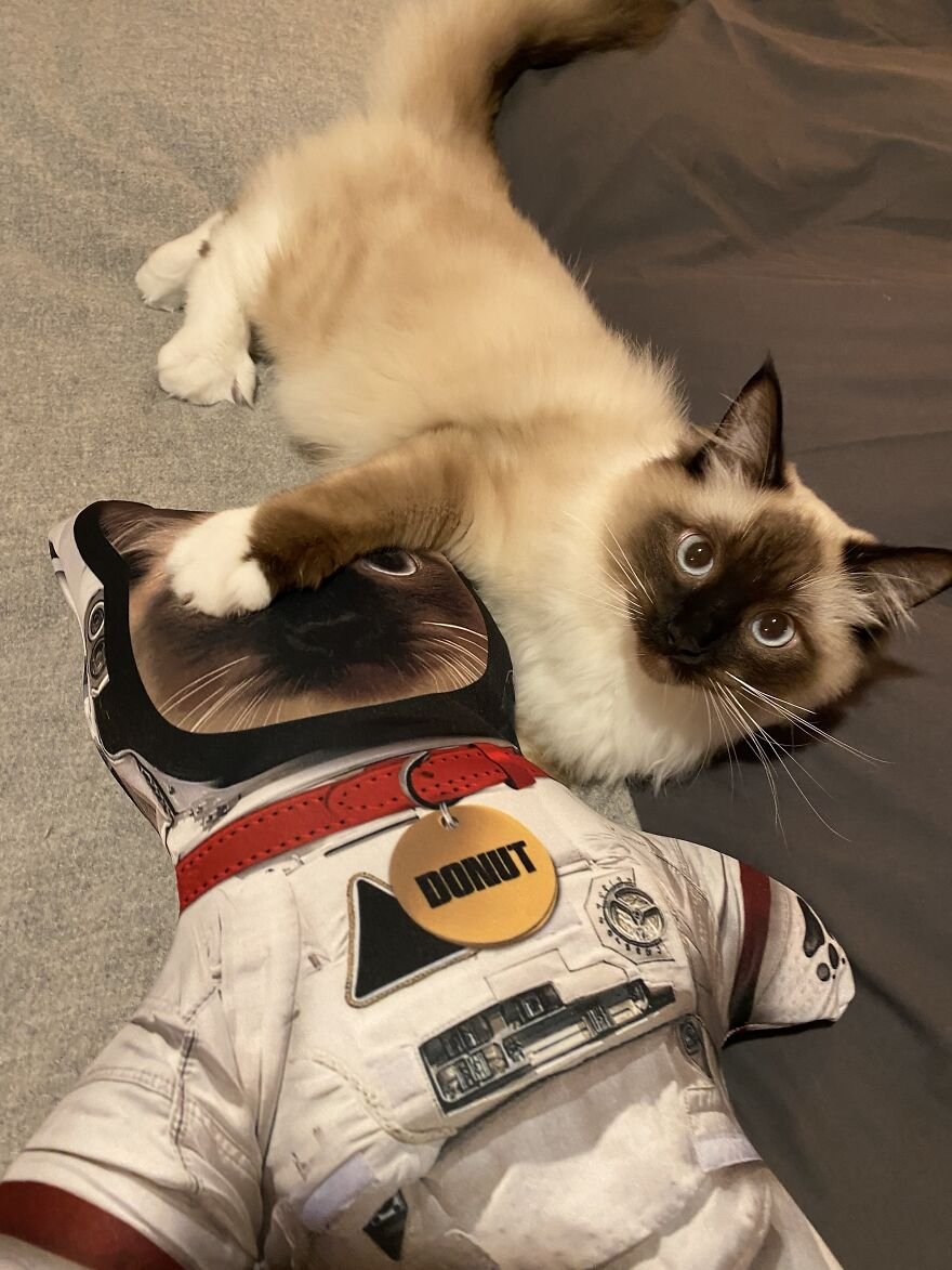 Donut Living His Best Astronaut Life