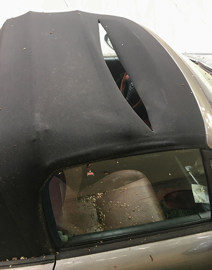 I Found Out Someone Cut Through The Convertible Top Of My Unlocked Car, Then It Rained Inside. I Was Let Go From My Job An Hour Later For Some Extra Spice