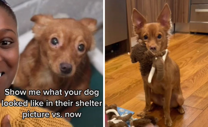 From The Shelter To Having His Own Army