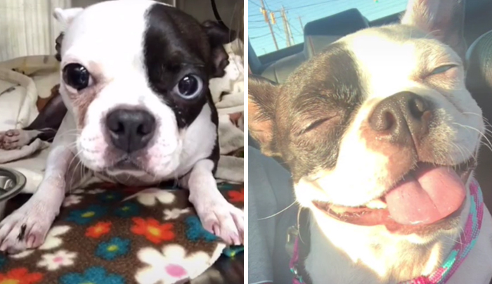 Shelter Pic —> Now. Seriously The Most Loved Dog In The World