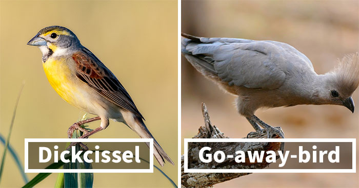 28 Bird Species Whose Names Prove Ornithologists Have A Sense Of Humor