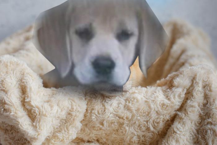 Gave Him A Blanket