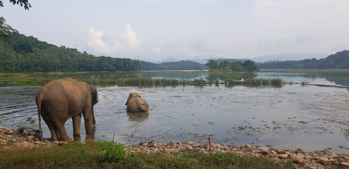 Elephant Sanctuary In Laos For Elephants Saved From Forced Labour.