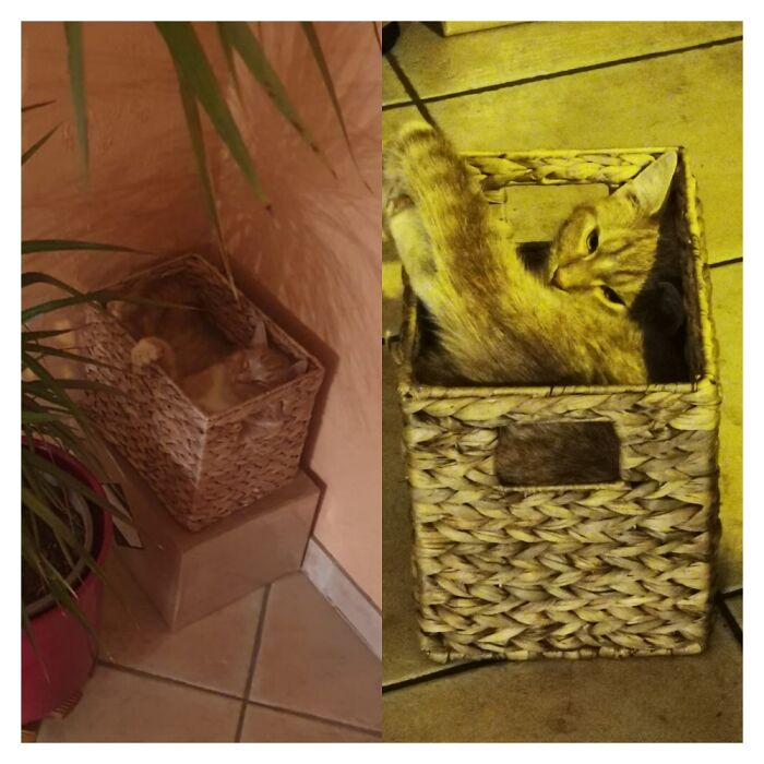 This Is Billy The Kitten, He Hasn't Kind Of Grasped That He Has Outgrown His Favourite Box
