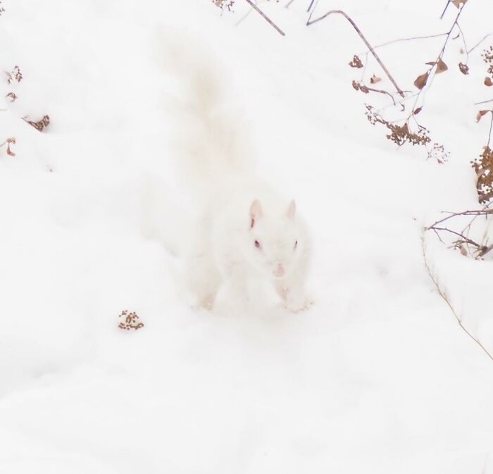 We Have An Albino Squirrel In Our Backyard. I've Been Stalking Him For His Photo. Finally Got One. Isn't He Beautiful!
