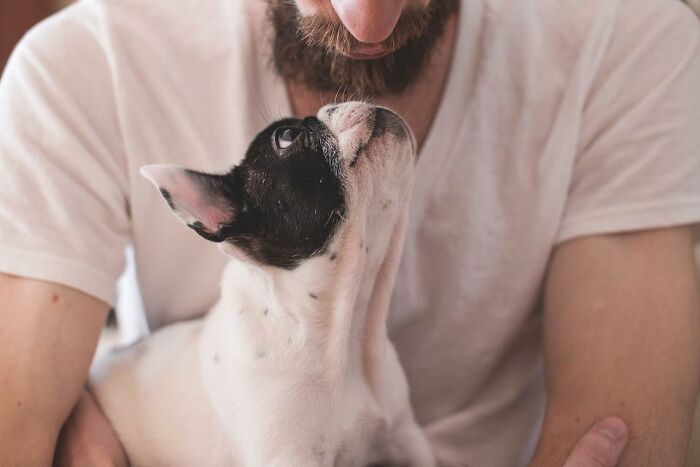 30 Veterinarians Share Things All Pet Owners Should Be Aware Of