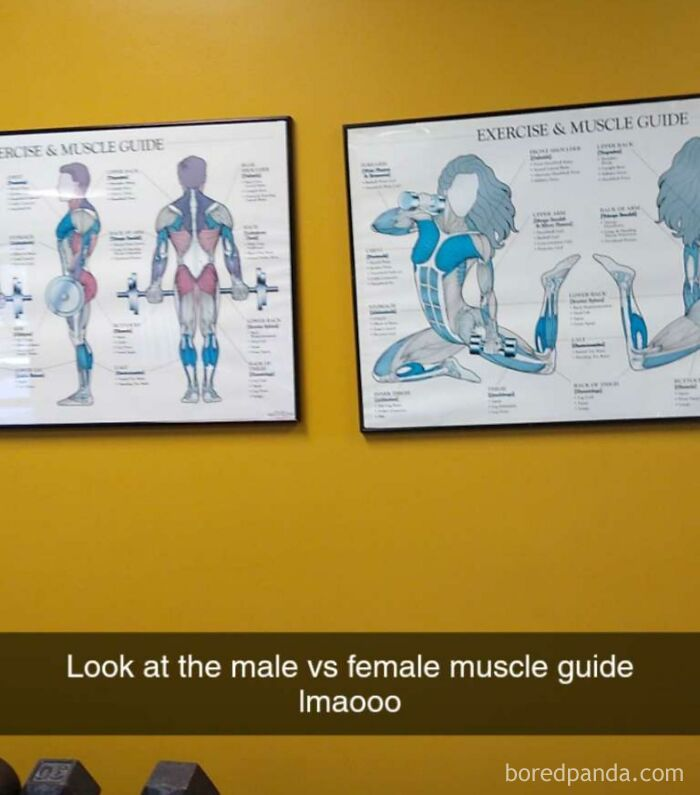 Literal Woman's Anatomy?