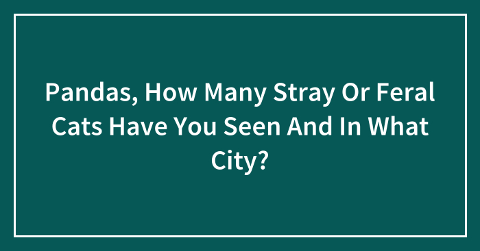 Pandas, How Many Stray Or Feral Cats Have You Seen And In What City? (Closed)