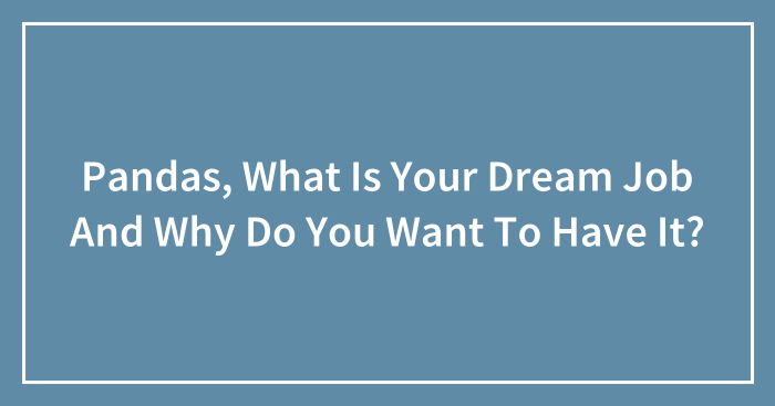 Pandas, What Is Your Dream Job And Why Do You Want To Have It? (Closed)